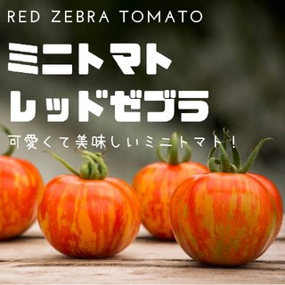 ミニトマト【レッドゼブラ】Red Zebra Tomato 種子20粒(その他)