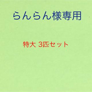 新鮮 🦀 紅 ズワイガニ 特大 3匹セット(魚介)