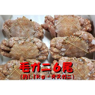 ボイル毛ガニ6尾(約1.1kgオスガニ)送料無料 発送制限あり説明文要確認(魚介)
