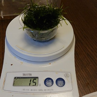 無農薬水草ウイローモス  15グラム(アクアリウム)