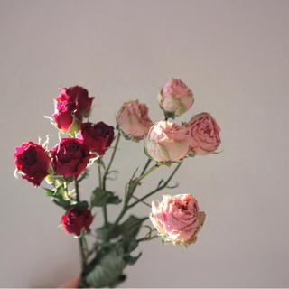 薔薇 ドライフラワー