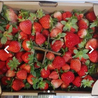 甘~い❤イチゴ虫食われバラ詰め❤ゆうべに莓1,8キロ 送料込3000円