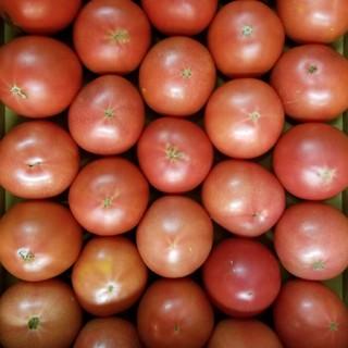 訳ありフルーツトマト 4kg