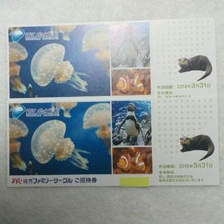 新江ノ島水族館入園招待券 2枚セット 2019年3月31日まで有効(水族館)