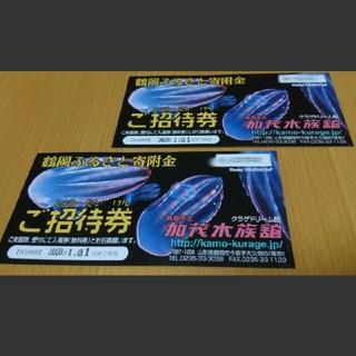加茂水族館 招待券 2枚 山形 チケット(水族館)