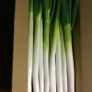 信州産白ネギ正味5キロを、専用の箱にてお詰めしてお届けします。(野菜)
