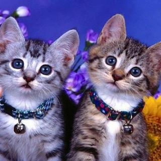 愛らしい子猫のきょうだい(A4額縁付きフルセット) ダイヤモンドアート(その他)