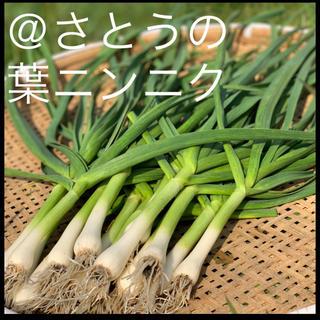 【土付き】農薬不使用 葉ニンニク 400g