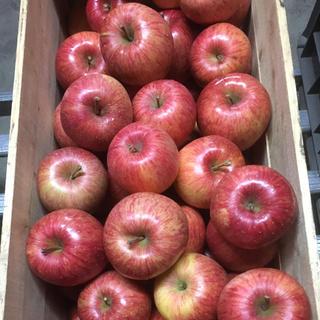 北国青森より〜蜜入り自慢!青森県産りんご 葉とらずふじ 5キロ