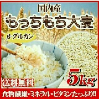 もっちもち麦 【大麦】5kg ★品質検査済み