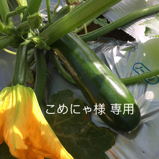 こめにゃ様 専用(野菜)