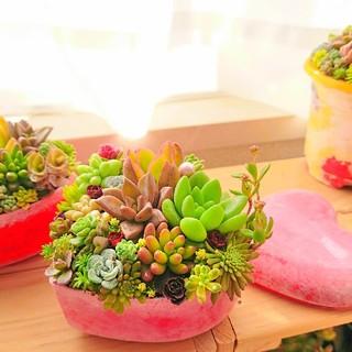 ◆多肉寄せ植え 多肉アレンジ ハート型 ミニ多肉つき(その他)