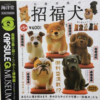 カイヨウドウ(海洋堂)の佐藤邦雄の招福犬 全5種セット ガチャ(その他)