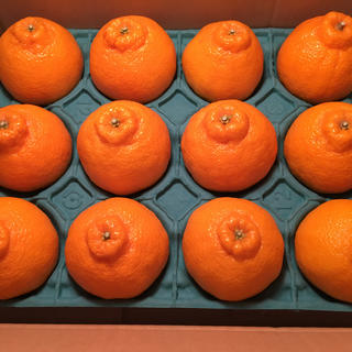 高級柑橘デコポン【夕やけブランド】愛媛県産 お試しセット 1/20以降発送