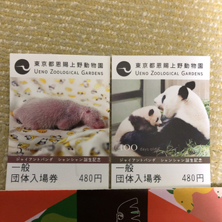 上野動物園一般団体入場券大人2枚(動物園)