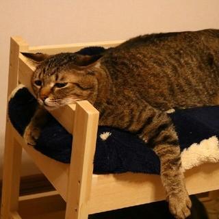 猫ちゃん用二段ベッド