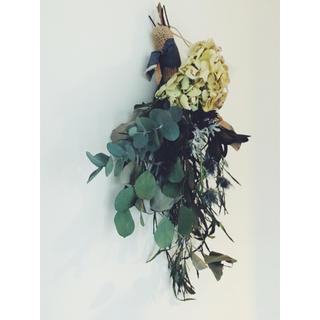 紫陽花 リューカデンドロンのシャビースワッグ shabby natural (ドライフラワー)