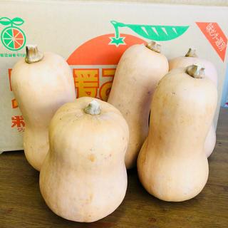 バターナッツかぼちゃ 5個