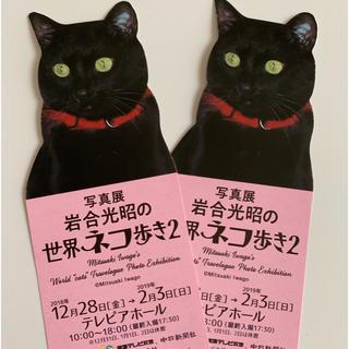 岩合光昭 世界のネコ歩き2  写真展(その他)