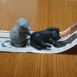 猫の毛づくろい  黒猫、灰猫セット