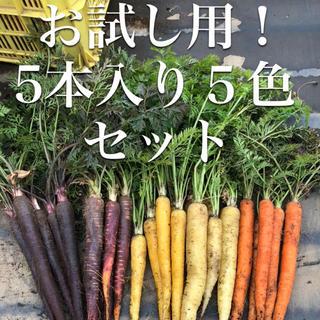 彩りフルーツにんじん。お試し5本入り5色。無農薬野菜(野菜)