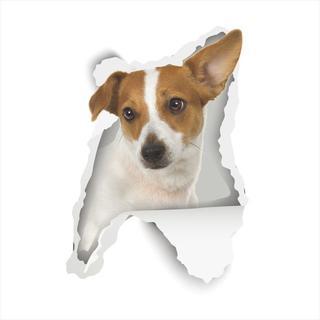 ジャックラッセルテリア デカシール・ウォールステッカー ♪ 新品未使用品004(犬)