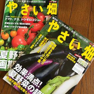 やさい畑 2018年 春号、初夏号(アート/エンタメ/ホビー)