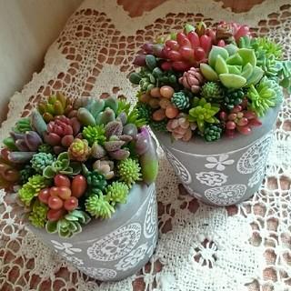 多肉植物の寄せ植え★グレーの可愛い鉢.。o○二個セット(その他)