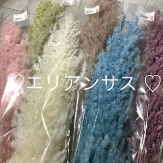 【新カラー】エリアンサス 全6色 アソート(プリザーブドフラワー)