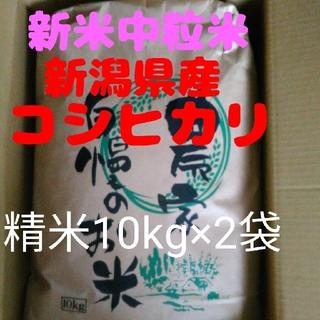 【即購入OK】新米新潟コシヒカリ中粒米10キロ精米×2袋