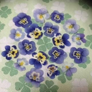 小さめブルー系のビオラ押し花素材☆