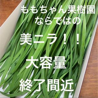 新鮮野菜 無農薬 ハウス栽培の冬ニラ 即購入可能!ラスト!!急いでください!