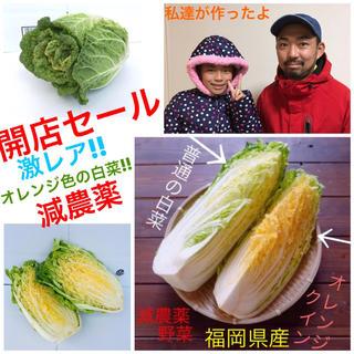 限定1セット★5点詰め合わせ★子供に人気甘いオレンジ白菜+無農薬サニーレタス