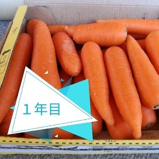 【無農薬・無肥料】究め人参約1.5kg-訳あり