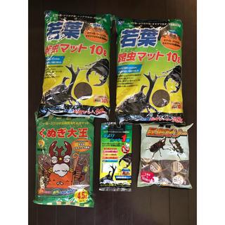 カブトムシ クワガタムシの飼育 5個セット(虫類)