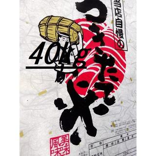 30年!山形県産(はえぬき)白米40kg 中粒米