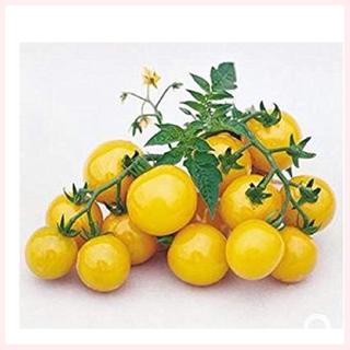 ★1名様限定★トマトの種mix8粒セット(野菜)