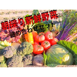 野菜詰め合わせ 新鮮野菜 80サイズ てんこもり