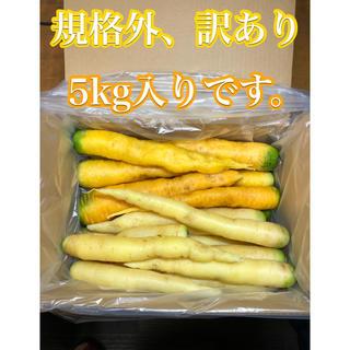 彩りフルーツにんじん。規格外、訳あり5kg。無農薬野菜