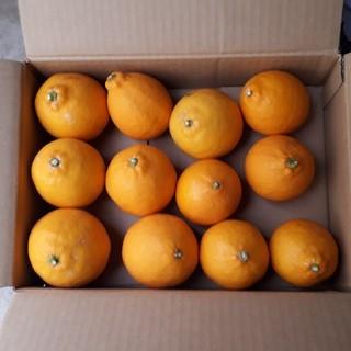限定1箱 国産無農薬 マイヤーレモン 2.5kg 送料無料 サイズ混合(フルーツ)