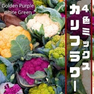 【カリフラワー】4色ミックス 種子20粒(その他)