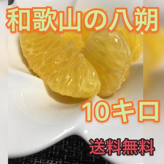 和歌山のはっさく 10キロ