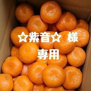 【☆紫音☆ 様 専用】大玉‼️和歌山県産 中生みかん 10㎏(フルーツ)