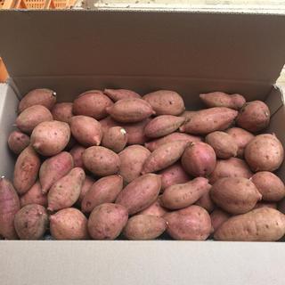 無農薬‼️安納紅5キロ種子島‼️