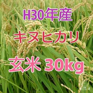 招き猫さま♪ 【定期購入】 H30年度《キヌヒカリ100% 玄米30kg(米/穀物)