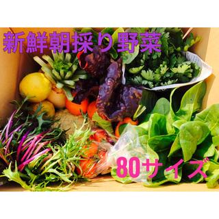 野菜詰め合わせ 新鮮野菜 80サイズ