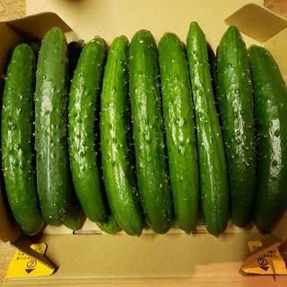 特A級品きゅうり。値段以上の価値あり!本物のを一度味わってみませんか(野菜)