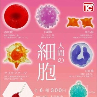 人間の細胞キーチェーン 赤血球 新品 (キーホルダー)