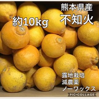熊本県産【不知火】家庭用約10kg《送料無料》