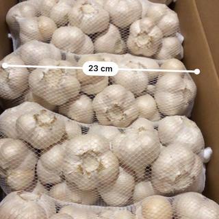 青森県産 福地ホワイト Mサイズにんにく 2キロ 送料無料(野菜)